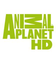 Animal Planet HD online tv